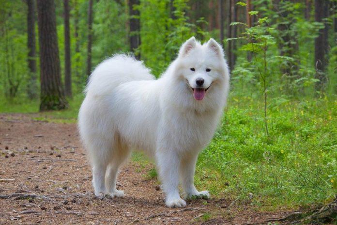 Dog's Potty Traning Tips